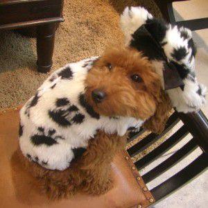 犬洋服_犬のコート【BlackWhiteFur コート】|wanwan3dogs