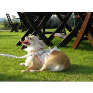 フリフリお嬢様♪足や頭を通さない簡単マジックタイプ♪犬のハーネスとリードのセット【Victorian Rose】お散歩犬用品/犬 ハーネス|wanwan3dogs|02