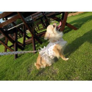 フリフリお嬢様♪足や頭を通さない簡単マジックタイプ♪犬のハーネスとリードのセット【Victorian Rose】お散歩犬用品/犬 ハーネス|wanwan3dogs|03