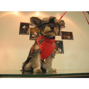 犬のハーネス【Easy Go Flash ハーネス&リードセット_レッド】ダウンジャケット/冬用/反射素材|wanwan3dogs|05