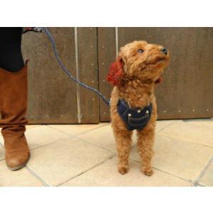 ガッチリタイプでお出掛けも安心♪犬のハーネスとリードのセット【Active Go デニムハーネス_インディゴ】ペットハーネス/胴輪/お散歩犬用品/犬 ハーネス|wanwan3dogs|04