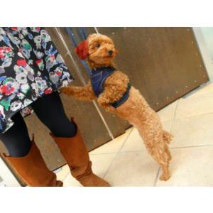 ガッチリタイプでお出掛けも安心♪犬のハーネスとリードのセット【Active Go デニムハーネス_インディゴ】ペットハーネス/胴輪/お散歩犬用品/犬 ハーネス|wanwan3dogs|05