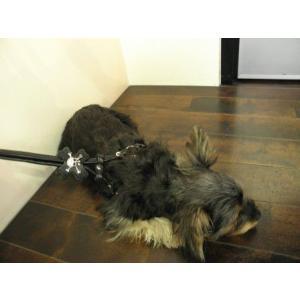 着脱ラクラクなコンパクトタイプ♪犬のハーネスとリードのセット【ブラックスカル】 wanwan3dogs 02