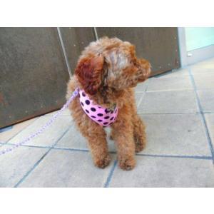 犬のハーネス【Pink Dots】ドット柄 wanwan3dogs 02