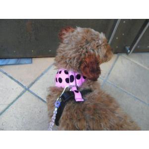 犬のハーネス【Pink Dots】ドット柄 wanwan3dogs 03