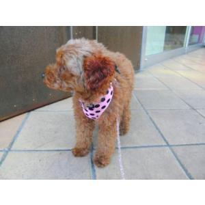 犬のハーネス【Pink Dots】ドット柄 wanwan3dogs 04