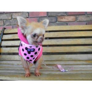 犬のハーネス【Pink Dots】ドット柄 wanwan3dogs 05