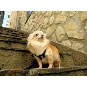 犬のレザーハーネス【Bucky Belt Jack Skull】革 ハーネス/胴輪/スカル/ドクロ/コンチョ/バイソンレザー/ハンドメイド/Pet Flys/ペットフライ|wanwan3dogs|05