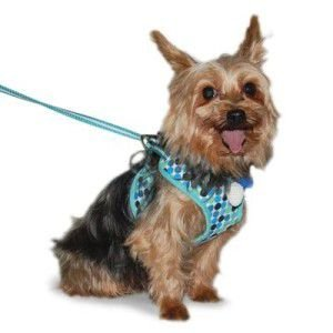 犬のハーネスとリードのセット【Easy Go Polka】ドット/水玉/ブルー|wanwan3dogs
