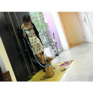 犬のハーネス&リードセット【The Lace Collection Blue】レース wanwan3dogs 04