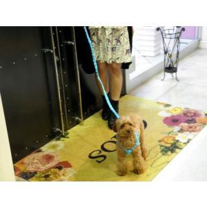 犬のハーネス&リードセット【The Lace Collection Blue】レース wanwan3dogs 05
