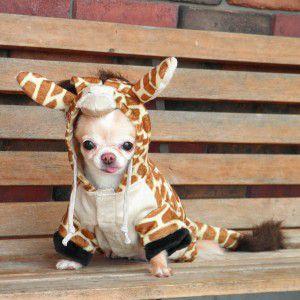 犬のコスチューム【キリン】 ペット用コスチューム/ハロウィン仮装/犬服/犬の洋服|wanwan3dogs