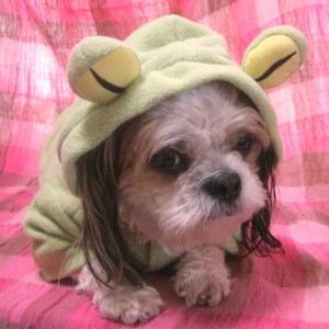犬のコスチューム【カエル】 ペット用コスチューム/ハロウィン仮装/犬服/犬の洋服/|wanwan3dogs