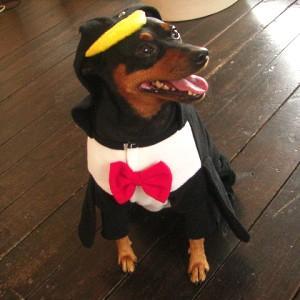 犬のコスチューム【ペンギン】 ペット用コスチューム/ハロウィン仮装/犬服/犬の洋服/|wanwan3dogs
