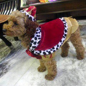 犬のコスチューム【Royal King】 ペット用コスチューム/ハロウィン仮装/王様/貴族/中世ヨーロッパ|wanwan3dogs