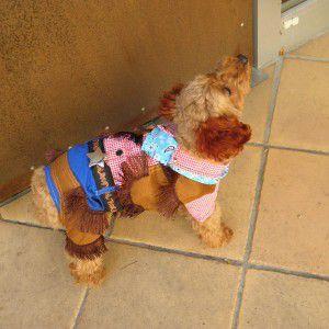 犬のコスチューム【カウボーイ】 ペット用コスチューム/ハロウィン仮装|wanwan3dogs
