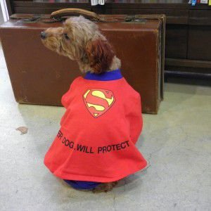 犬のコスチューム【Super Dog】 ペット用コスチューム/ハロウィン仮装|wanwan3dogs