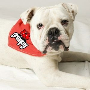 犬のバンダナ【Grumpy】ドッグバンダナ/犬用バンダナ/犬グッズ/犬用品|wanwan3dogs