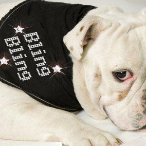 犬のバンダナ【Bling Bling】ドッグバンダナ/犬用バンダナ/犬グッズ/犬用品|wanwan3dogs