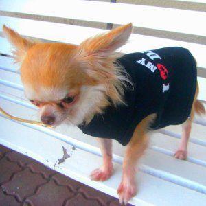 再入荷無し★スペシャル価格★アイラブダディープリント♪父の日にも◎犬のタンクトップ【I love daddy dog タンク】犬服/犬の洋服|wanwan3dogs