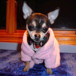 【ダックスファン掲載】犬のバスローブ【Pink バスローブ】浴衣/パジャマ/ペット用バスローブ/犬服/犬の洋服 wanwan3dogs
