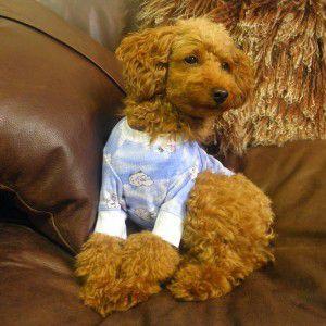 犬のパジャマ【Lambchop Blue】ラフラフクチュール/犬服/犬の洋服/ペット服 wanwan3dogs