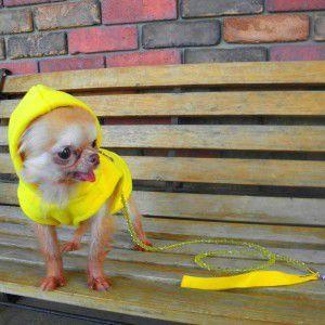 犬のパーカー【GOOBY オリジナル フリース ベストパーカー_イエロー】シンプルな無地/ネームタグ付き/リード取り付け可能/犬 服/犬 フリース|wanwan3dogs