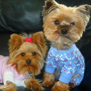 犬のパジャマ【Blue Bone】犬用パジャマ wanwan3dogs