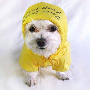 犬のレインコート【Rain drops keep falling】ペットのレインコート/雨具/レイングッズ/お散歩用品|wanwan3dogs