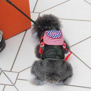 犬のリュック【お散歩リュック_USA Stars and Stripes】アメリカ国旗|wanwan3dogs