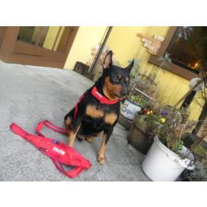 アウトドアリード【ピックポケットリード レッド】アウトドア用品/ナイロン/うんち袋、小物収納可能/犬 リード/ペット リード wanwan3dogs 05