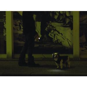 電池不要LEDライト搭載の夜間用伸縮リード【エコリード】アウトドア用品/犬 アウトドアリード/生活防水仕様|wanwan3dogs|05