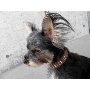 犬の首輪とリードのセット【Metro Metal】3色スタッズ/ペットの首輪/アンティーク調カラー/お散歩犬グッズ|wanwan3dogs|04