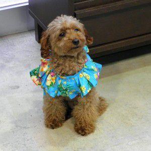 犬のハワイアンドレス【ムームードレス】|wanwan3dogs