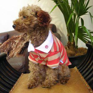 犬のポロシャツ【PP Red ボーダーポロ】DOGO/犬用ポロシャツ/ペット用ポロシャツ/犬服/犬の洋服/ペット服 wanwan3dogs