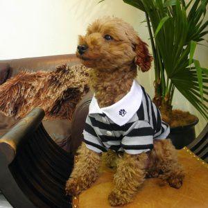 犬のポロシャツ【PP Black ボーダーポロ】DOGO/犬用ポロシャツ/ペット用ポロシャツ/犬服/犬の洋服/ペット服|wanwan3dogs