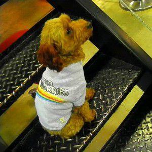 犬のTシャツ【No Worries】ペット用Tシャツ/犬服/犬の洋服/ペット服|wanwan3dogs