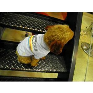 犬のTシャツ【No Worries】ペット用Tシャツ/犬服/犬の洋服/ペット服|wanwan3dogs|04
