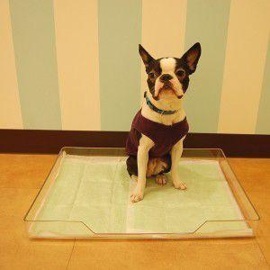 犬のトイレ【クリアレットトレー&シーツストッパーセット】ペットトイレ/犬用品|wanwan3dogs