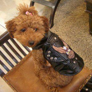 送料無料♪【いぬもん掲載】犬のジャケット【モーターサイクル バイカージャケット】犬用ジャケット/犬服/犬の洋服|wanwan3dogs