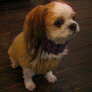 犬のセーター【イエロー&パープル_タートルセーター】手編みセーター/犬のニット/ペットセーター/犬服/犬の洋服|wanwan3dogs