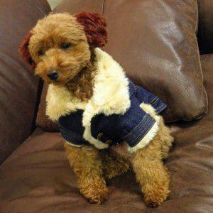 犬のあったかランチコート【Winter chic デニムコート】犬用コート/ペットのコート/犬服/犬の洋服|wanwan3dogs