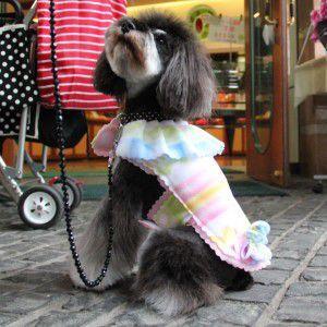 犬のジャケット【Jazzy Girl】犬用ジャケット/フリースジャケット/マジックテープ仕様/犬服/犬の洋服|wanwan3dogs