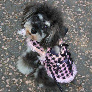 犬のコート【All About Business】犬のツイードコート/ペットのコート/犬服/犬の洋服|wanwan3dogs