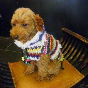 送料無料♪犬のセーター【New folklore セーター_マーブルカラーボーイッシュ_ブルー】手編みセーター/犬のニット/ペットセーター/犬服/犬の洋服|wanwan3dogs