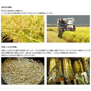熊本県産 特別栽培米 阿蘇 コシヒカリ 2k 九州のお米  |  2キロ 安心 安全 お米 ブランド米 ブランド おいしい 美味しい ご飯 熊本県 九州 米|wao-shop|04