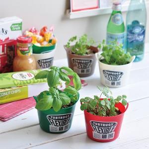 ガーデニング 家庭菜園 タブグリーン(全4種) *メール便不可|wappenstore