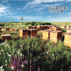 森羅万象 天山蜂蜜(600g)|waseda|02