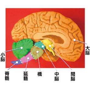 脳幹トレーニングNKクッション|waseda|02