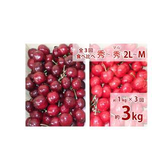 福島のさくらんぼ 全3回お届け食べ比べセット(早生種・中生種・晩生種) 家庭用1kg×3回|watanabe-kajuen